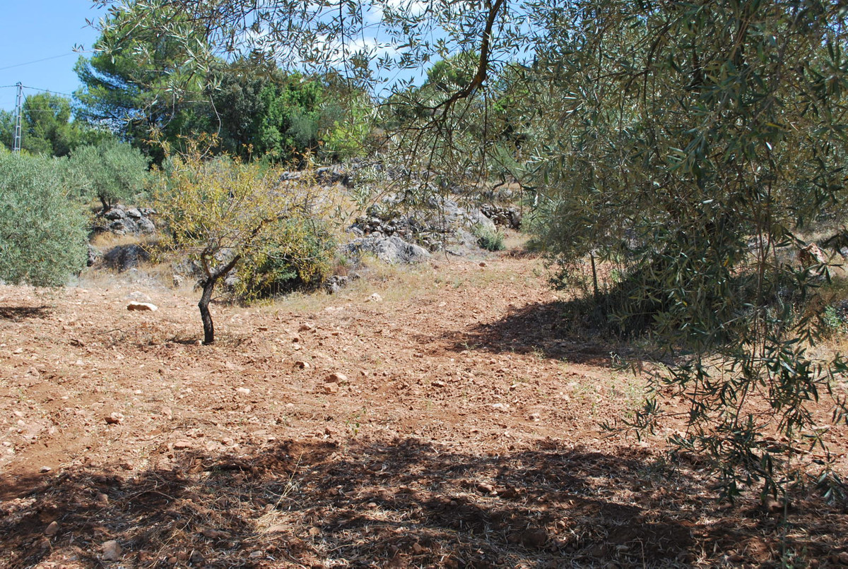 0-bed-Land Plot for Sale in Monda