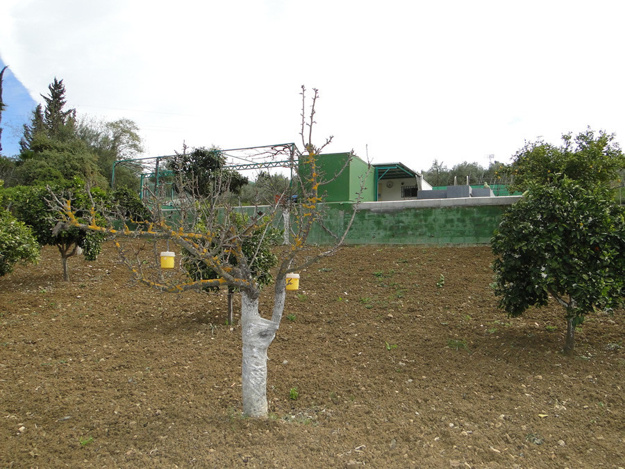 1-bed-Land Plot for Sale in Guaro