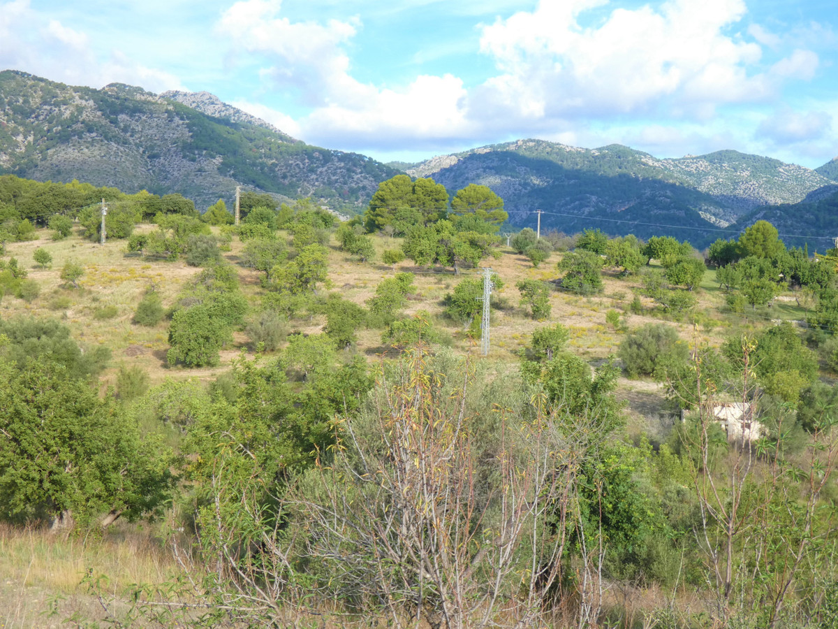 Rustic plot for sale near to the village of Moscari., Spain