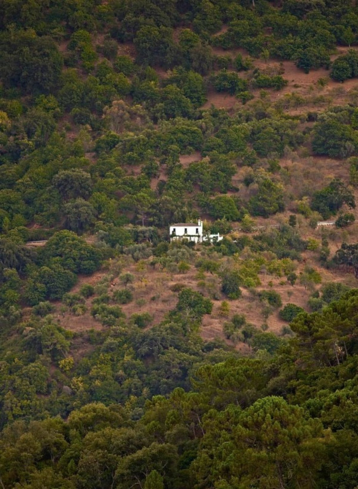 Lovely Finca  in the middle of nature with easy axcces  Beautiful finca surrounded by nature and sti,Spain