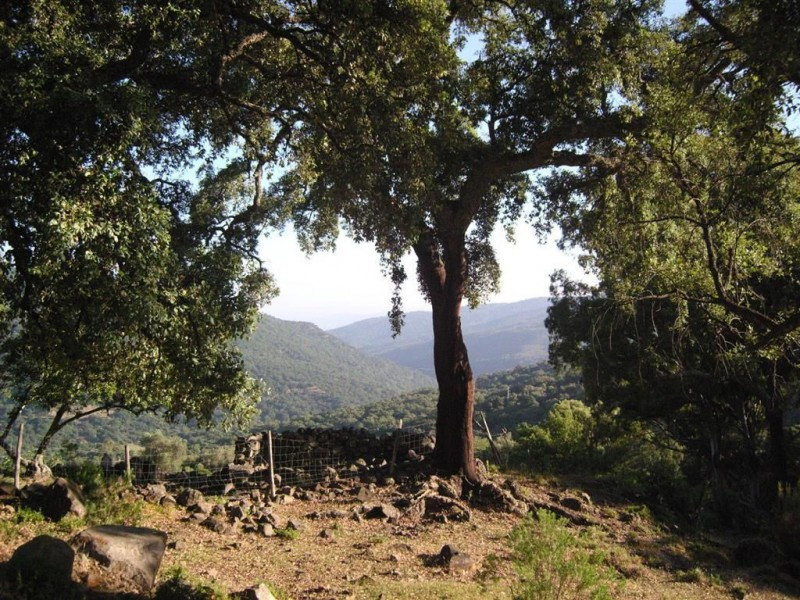 Plot for sale in Estacion de Gaucin. Regarding property dimensions, it has 300000 m² plot.   This pr, Spain