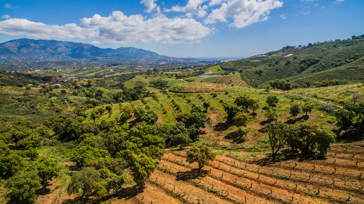 Large investment plot with mango and avocado trees. There are 8000 trees planted at the moment. Also,Spain