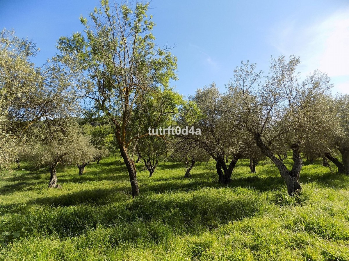 RURAL PLOT 15KM FROM MARBELLA TOWN  This well sized, flat, rural plot of exactly 5.252 sqm is only a,Spain