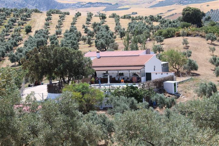 FOR SALE ; PROPERTY OF OLIVES OF 28,700m2. NEXT TO CAMINITO DEL REY, IN ANTEQUERA. MALAGA.  Large fa,Spain