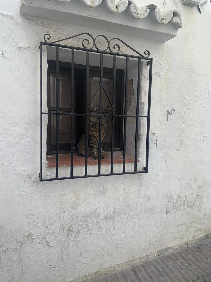 House - Ojén